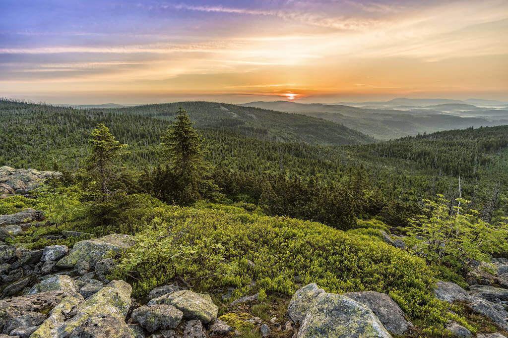 Bayerischer Wald_01